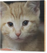Sweet Kitten Wood Print