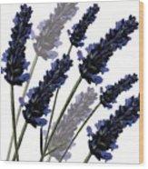 Sweet Lavender Wood Print