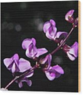Sweet Pea Delight Wood Print
