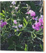 Sweet Pea In Tahoe Wood Print