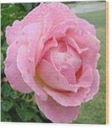 Sweet Peach Rose Wood Print