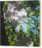 Sweet Peas 103 Wood Print