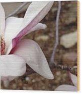Sweet Pink Magnolia Wood Print
