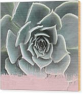 Sweet Pink Paint On Succulent Wood Print