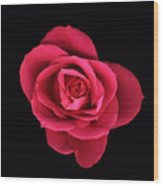 Sweet Pink Rose Wood Print