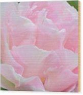 Sweet Pink Tulip Wood Print
