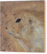 Sweet Profile Of A Prairie Dog Playing In Dirt Wood Print