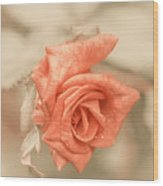 Sweet Sensation Wood Print