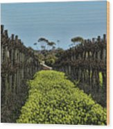 Sweet Vines Wood Print