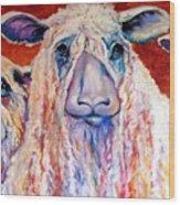 Sweet Wensleydales Sheep By M Baldwin Wood Print by Marcia Baldwin