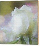 Sweet White Rose Wood Print