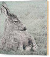 Sweet Young Deer Wood Print
