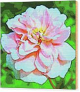 Sweetheart Rose On A Sunny Day Wood Print