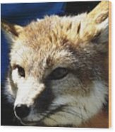 Swift Fox With Oil Painting Effect Wood Print
