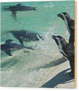 Swim Race - African Penquins Wood Print