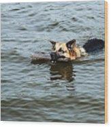 Swimming Dog Wood Print