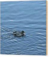 Swimming Duck Wood Print
