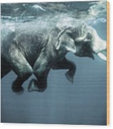 Swimming Elephant Wood Print