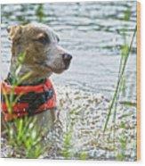 Swimming Family Dog Wood Print