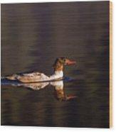 Swimming Female Merganser - Odell Lake Oregon Wood Print