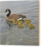 Swimming Geese Wood Print