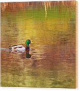 Swimming In Reflections Wood Print