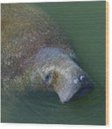 Swimming Manatee Wood Print