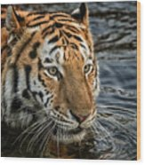 Swimming Tiger Wood Print