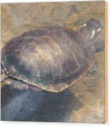 Swimming Turtle Wood Print