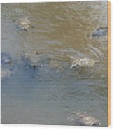 Swimming Turtles Wood Print