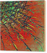 Swirl Barrel Cactus Wood Print