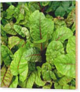 Swiss Chard In A Vegetable Garden 4 Wood Print
