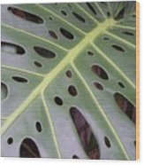 Swiss Cheese Plant Wood Print