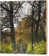 Swithland Woods, Leicestershire Wood Print