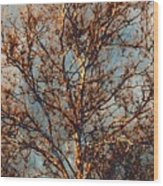 Sycamore Against November Sky Wood Print