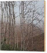 Sycamore Canyon Trail In Rain Wood Print