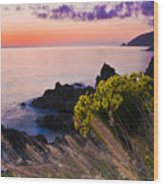 Sycamore Cove After Sunset Wood Print