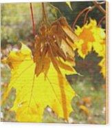 Sycamore Fruits Wood Print