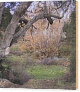 Sycamore Grove Fall Wood Print