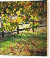 Sycamore Grove Fence 2 Wood Print