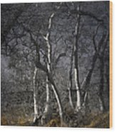 Sycamore Grove Wood Print