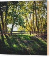 Sycamore Grove Series 12 Wood Print
