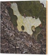 Sycamore Wood Print