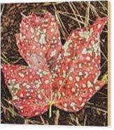 sycamore maple Autumn leaf Wood Print