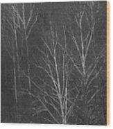 Sycamore Series 1 Wood Print
