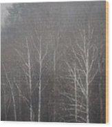 Sycamore Series 5 Wood Print