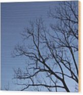 Sycamore Silhouette Wood Print