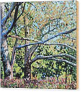 Sycamore Trees At The Zoo Wood Print