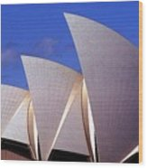 Sydney Harbor Fins Wood Print