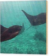 Synchronized Swimming Wood Print